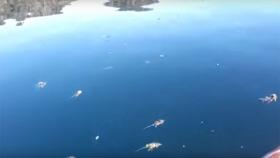 Cientos de ratas muertas en lagos del sur